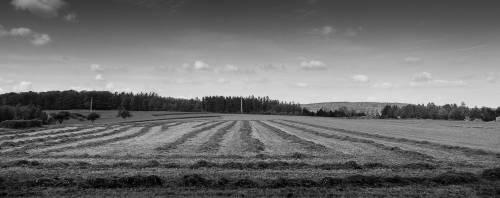 land_sw_petervogel_025.jpg