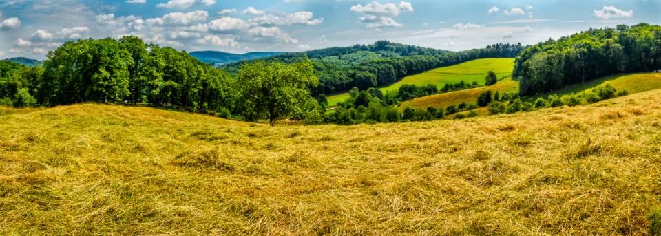 land_petervogel_013.jpg