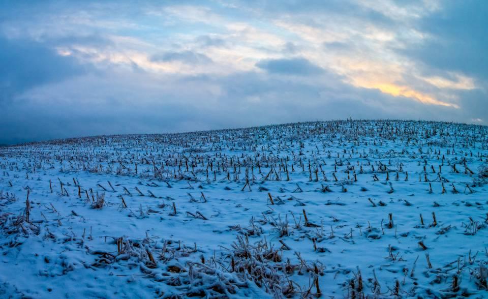 land_petervogel_044.jpg