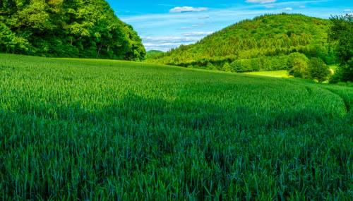 land_petervogel_002.jpg