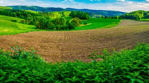 land_petervogel_058.jpg