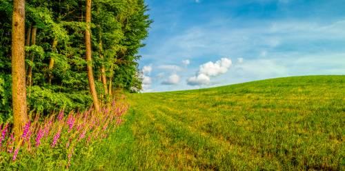 land_petervogel_065.jpg
