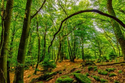land_petervogel_069.jpg