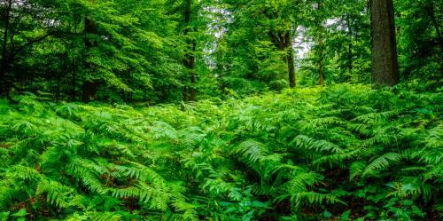 land_petervogel_073.jpg